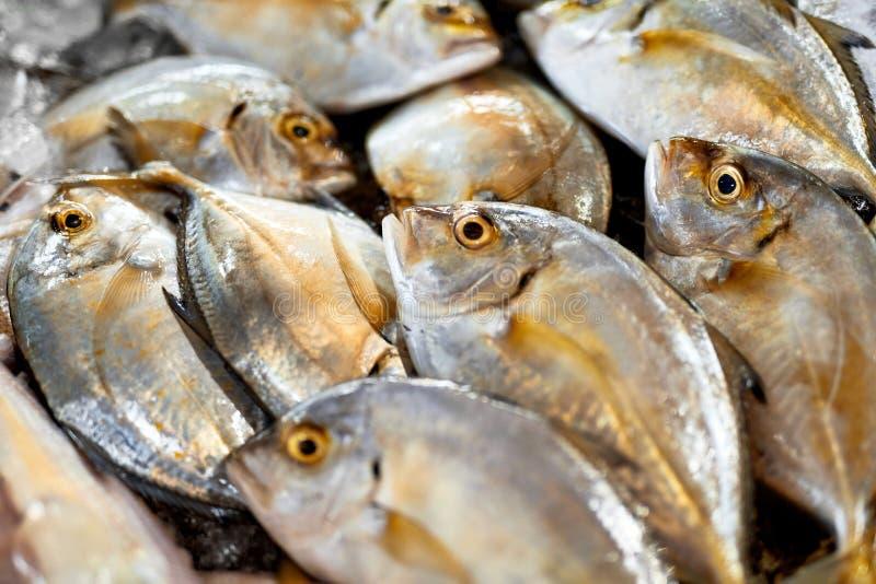 Alimento fresco, pesce crudo Malabar Trevally Nutrizione sana, dieta, immagini stock libere da diritti