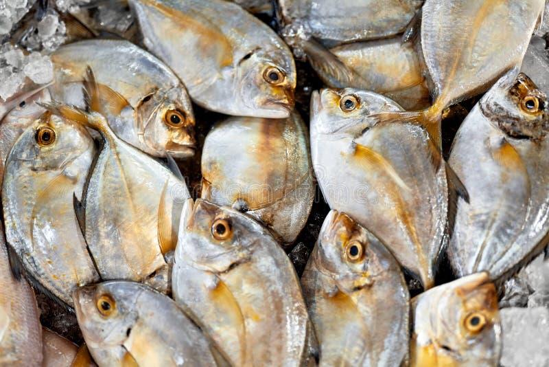 Alimento fresco, pesce crudo Malabar Trevally Nutrizione sana, dieta, fotografia stock
