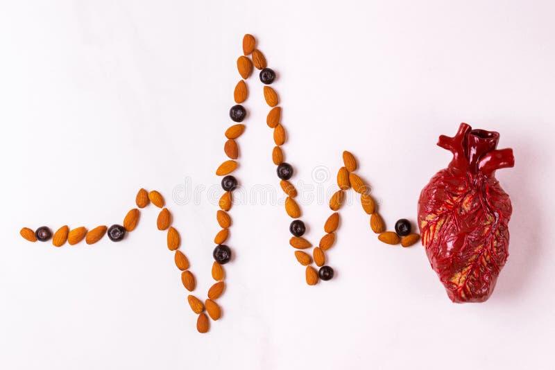 Alimento, modello del cuore e cardiogramma sani della mandorla Abstrac medico immagine stock