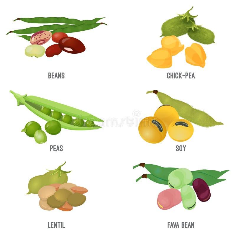Alimento natural do grupo da espécie dos feijões, o saudável e o nutritivo ilustração stock