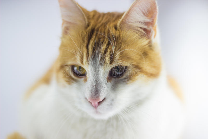 Alimento para animales del gato imagen de archivo libre de regalías