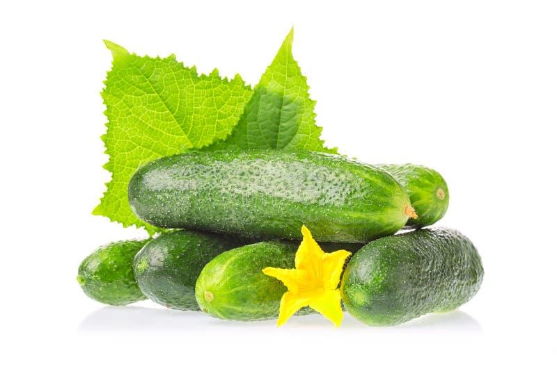 Alimento sano organico Verdure naturali del cetriolo verde fresco con la foglia ed il fiore isolati su fondo bianco Chiuda sull'i immagini stock