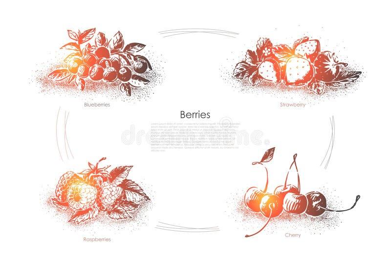 Alimento saporito, dessert maturo succoso, mirtilli freschi, fragola, lamponi e ciliegia, insegna sana di nutrizione illustrazione vettoriale
