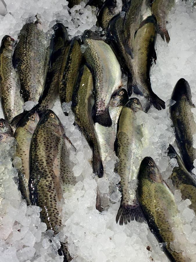 Alimento saporito e sano fresco di coloritura del leopardo del pesce di mare del primo piano, fotografie stock libere da diritti