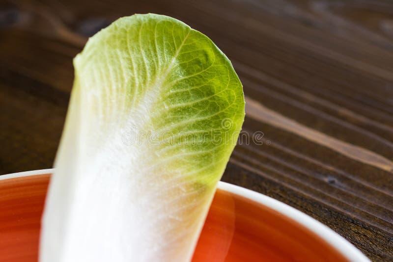 Alimento saudável orgânico da endívia fresca Salada crua da chicória imagem de stock royalty free