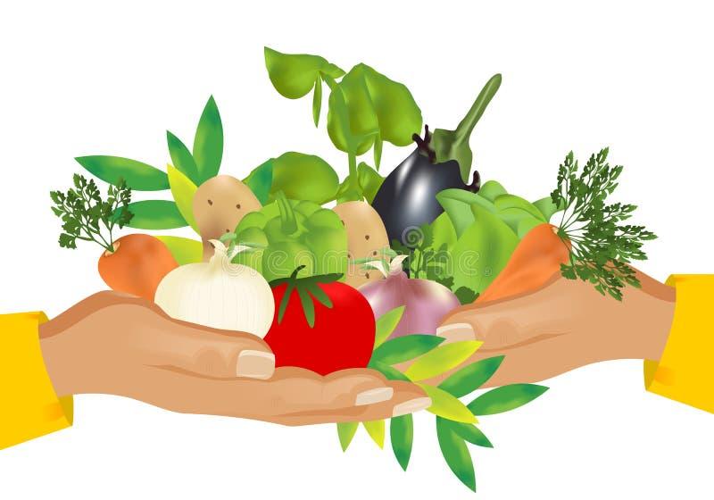 Alimento saudável (vegetais), vetor dos cdr ilustração do vetor