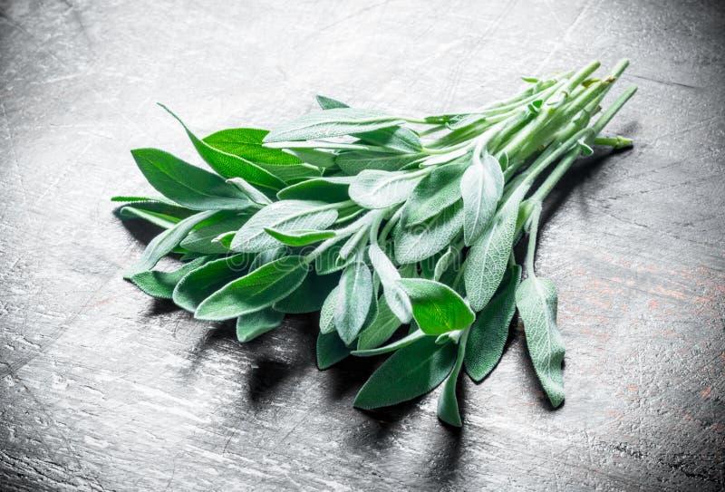 Alimento saud?vel Salvia fresco imagem de stock royalty free