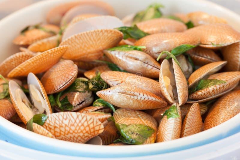 Alimento tailandês manjericão e moluscos fritados fotografia de stock