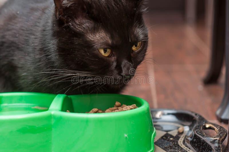 Alimentos para animais de estimação em casa para um bom apetite fotos de stock royalty free