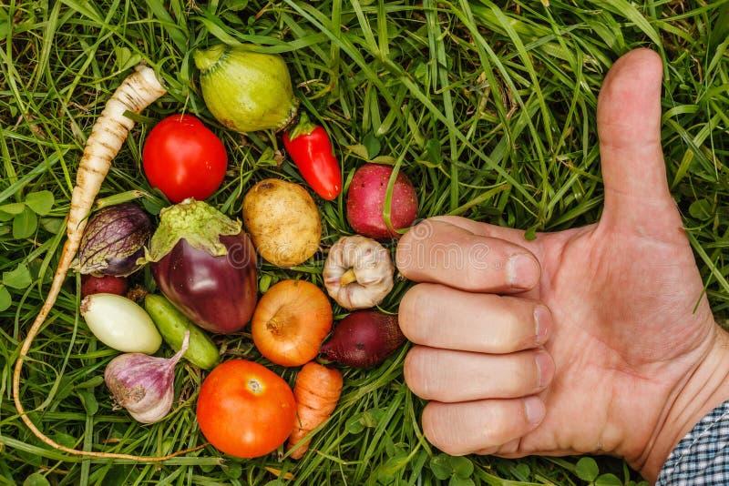 Alimentos sanos comida cruda de la cosecha del otoño para los vegetarianos fotografía de archivo