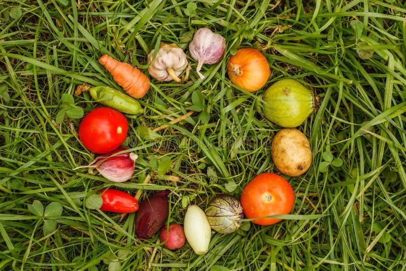 Alimentos sanos comida cruda de la cosecha del otoño para los vegetarianos foto de archivo