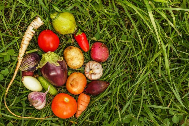 Alimentos sanos comida cruda de la cosecha del otoño para los vegetarianos imagen de archivo libre de regalías