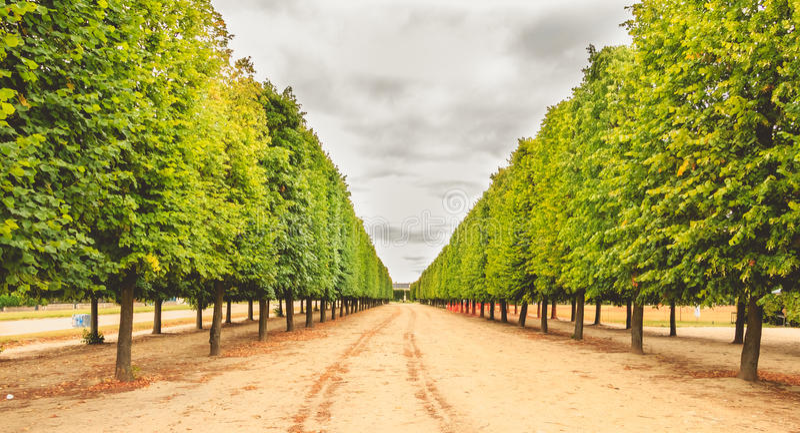Alineación de árboles en un jardín francés imágenes de archivo libres de regalías
