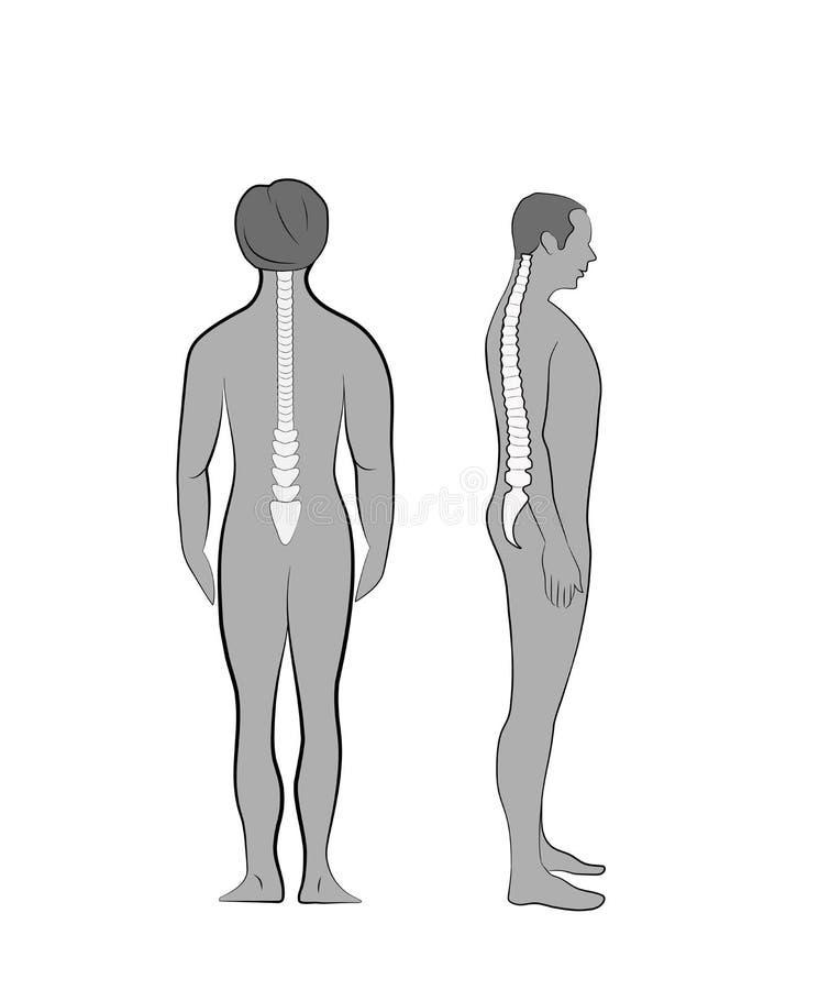 Alineación del cuerpo humano en la postura derecha para la buena personalidad y sano correctos de espina dorsal y del hueso Atenc ilustración del vector
