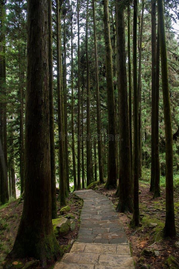 Alishan, Chiayi-Stadt, Taiwan-Urwald stockbilder