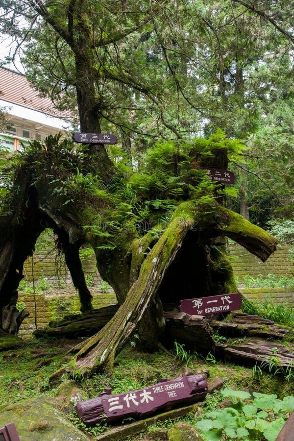 Alishan, cidade de Chiayi, floresta virgem de Taiwan nas três gerações de madeira imagens de stock