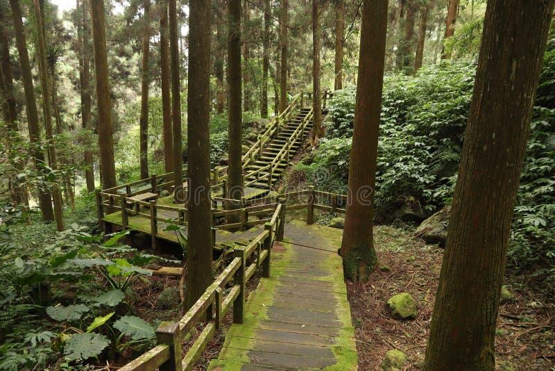 Alishan Forest Trail fotografia de stock royalty free