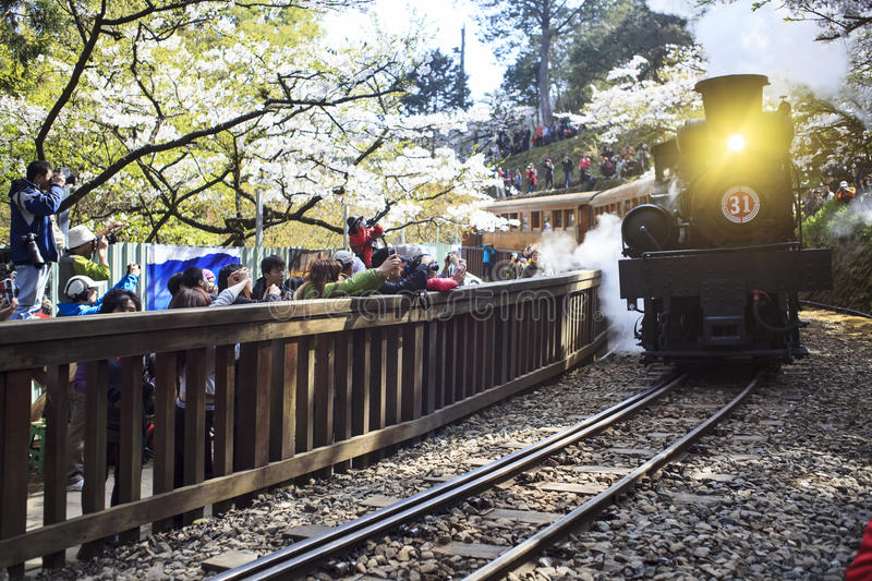 Alishan forest train in Alishan National Scenic Area stock photography