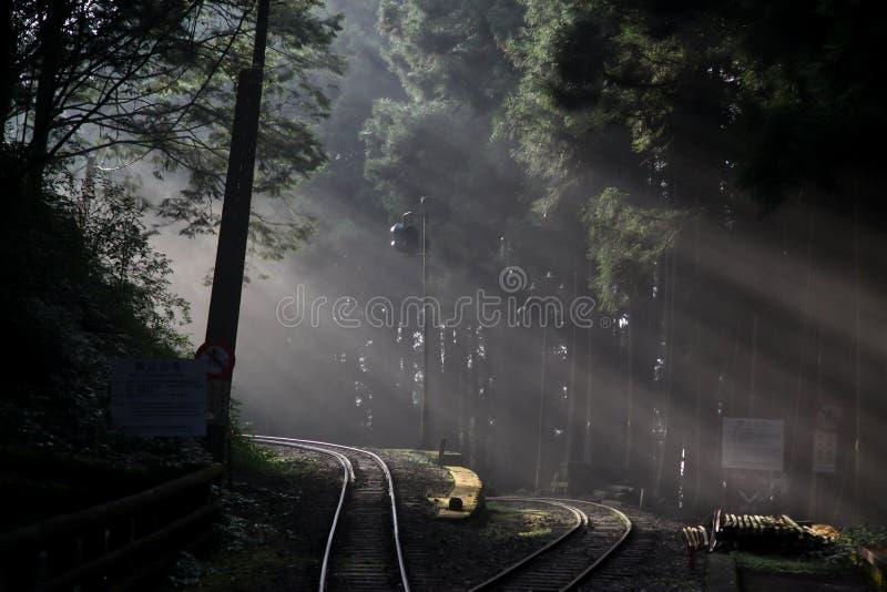 Alishan, Taiw?n-octubre 14,2018: luz del sol en bosque en el ferrocarril en la l?nea de Alishan, Taiw?n imagen de archivo