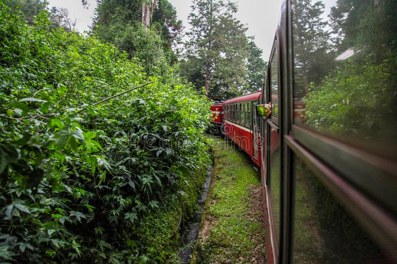 Alishan,taiwan-October 14,2018:Red train run in foggy day at alishan line on alishan mountain,taiwan. View, metal, park, tourism, forest, outside, blossom stock photos