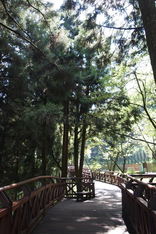 Alishan Trail stock photography