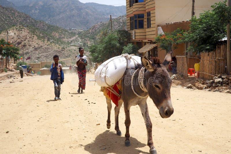 Alitena,埃塞俄比亚- 2019年6月4日:驴为每日运输仍然使用在许多发展中国家 免版税库存图片