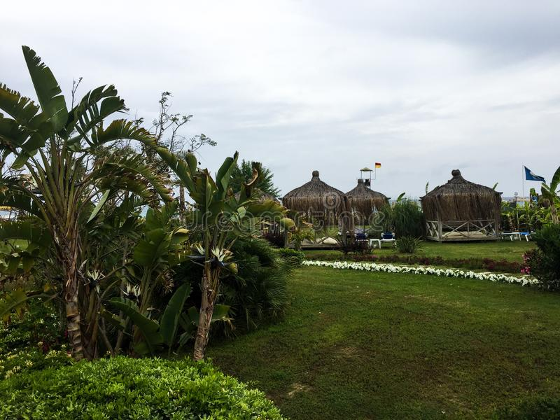 Alkierz i drzewka palmowe obraz royalty free