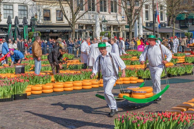 Alkmaar Nederl?nderna - April 12, 2019: Traditionell ostmarknad p? den Waagplein fyrkanten i Alkmaar arkivbild