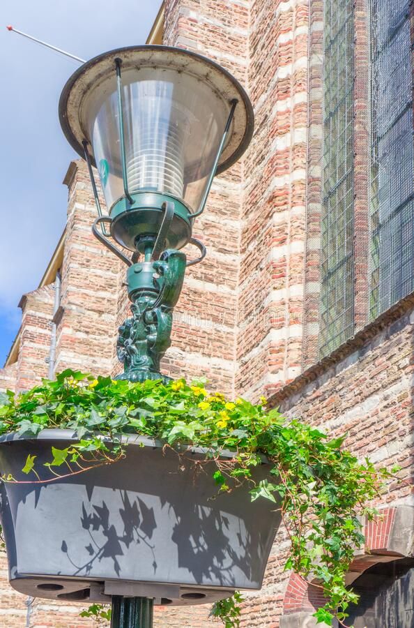 Alkmaar, the Netherlands - April 12, 2019: Street lamp with decorative liana.  stock image