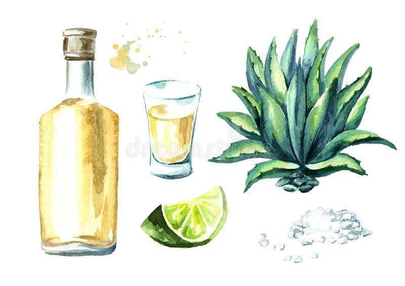Alkoholgetränk Tequilasatz, gelbe Flasche mexikanische Kaktusschnäpse, volles Schnapsglas mit Scheibe des Kalkes und Salz, Agaven vektor abbildung