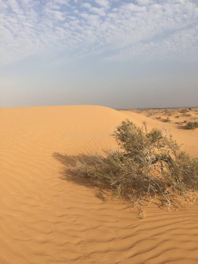 A allé voir le désert photos libres de droits