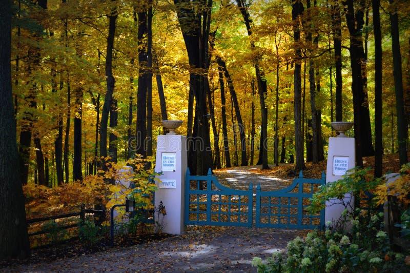 Allée à déchenchements périodiques, couleurs d'automne photos stock