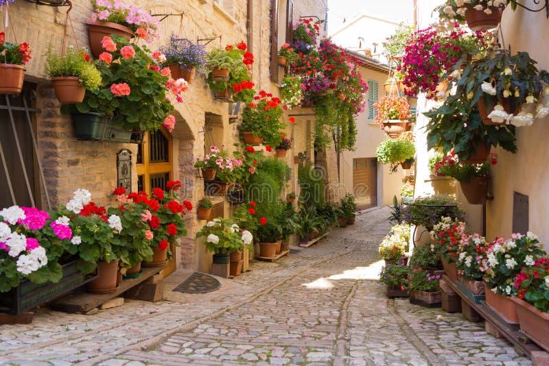 Allée avec des pots de fleurs dans Spello, Ombrie, Italie photo libre de droits