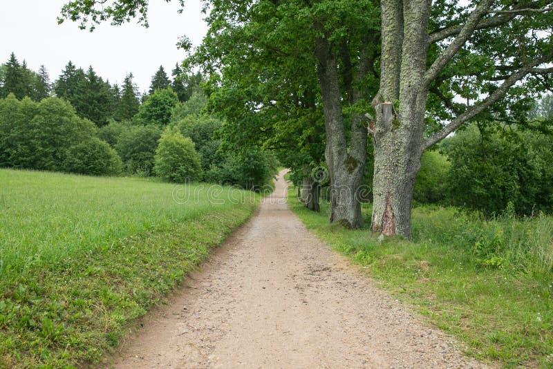 Allée d'arbre et pré vert, chemin vers la rivière photos stock