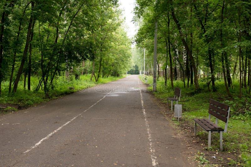 Allée d'arbres de parc photos libres de droits