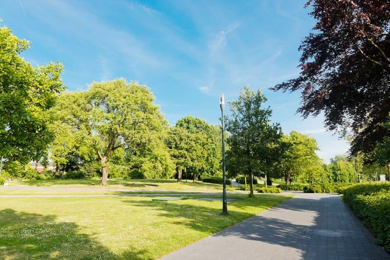 Allée d'arbres de parc photographie stock libre de droits