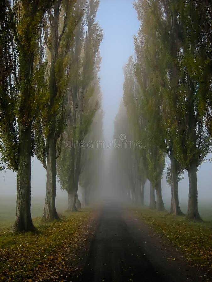 Allée dans le brouillard photos libres de droits