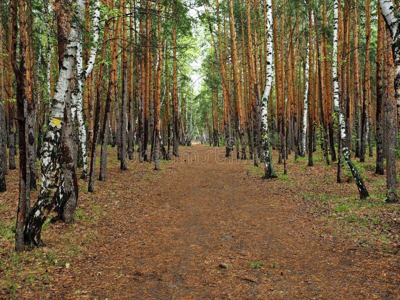 Allée dans les bois image stock