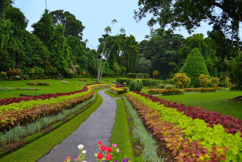Allée dans les jardins botaniques royaux, Kandy Le Sri Lanka photographie stock libre de droits