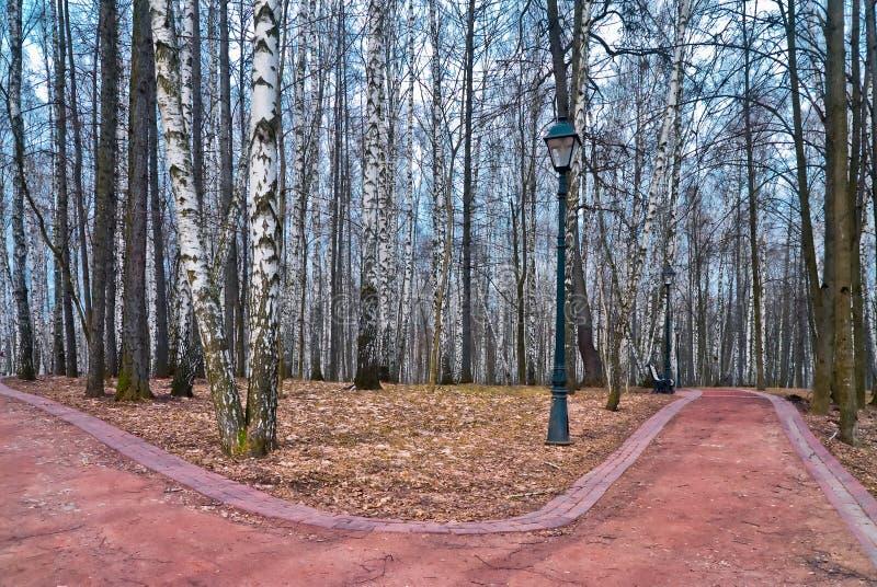 Allée de bouleau en parc d'automne avec des chemins photographie stock