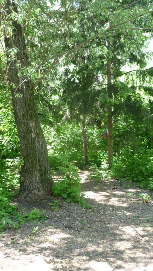 Allée de forêt en parc photo stock