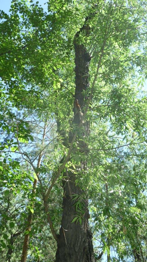 Allée de forêt en parc photo libre de droits