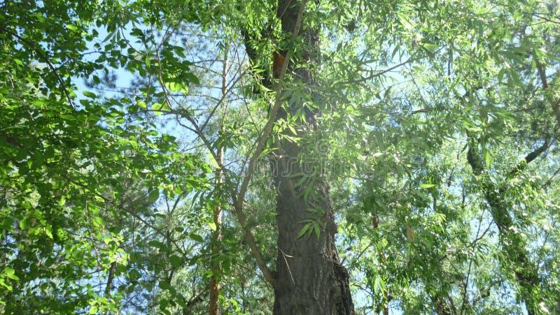 Allée de forêt en parc image libre de droits