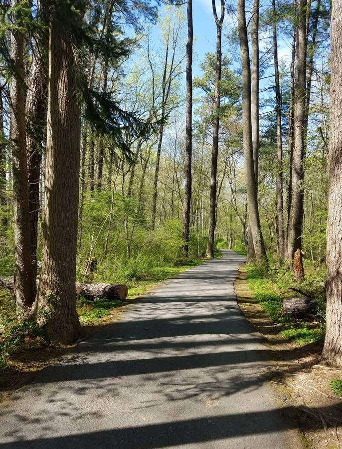 Allée de marche par un parc en premier ressort photos libres de droits