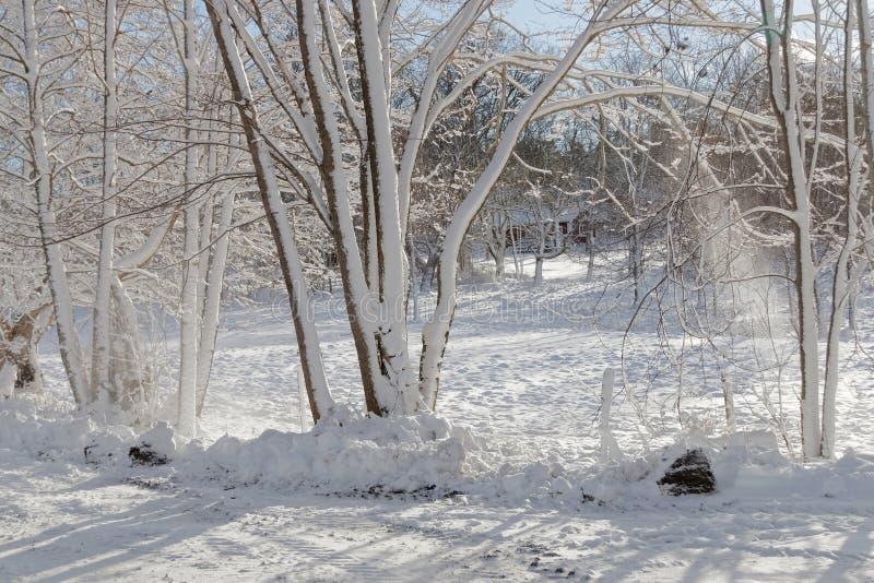 Allée de Milou des arbres par jour d'hiver ensoleillé photos libres de droits