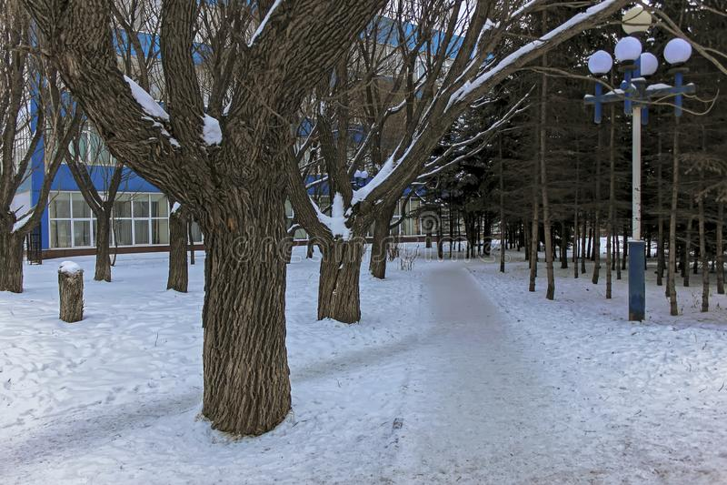 Allée de Milou en parc une soirée d'hiver image stock
