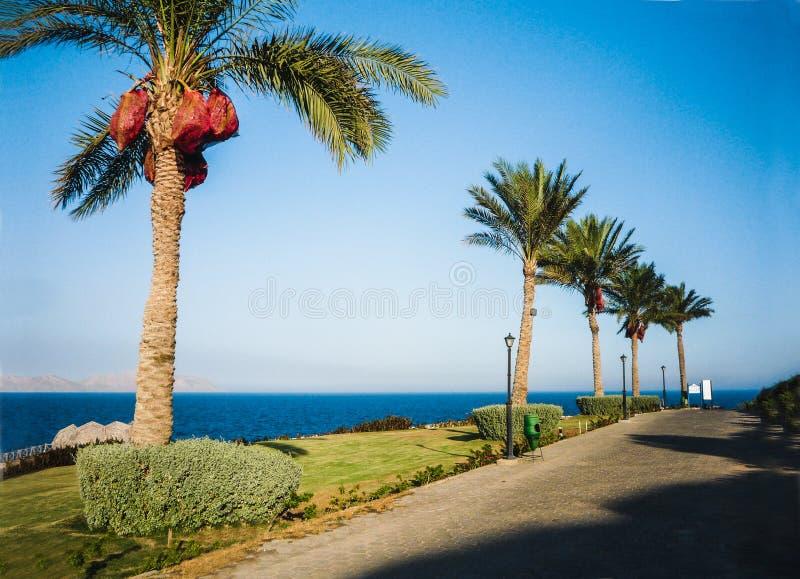 Allée de palmier dans une station de vacances d'hôtel sur la côte de la Mer Rouge dans le Sharm el Sheikh, Egypte images stock