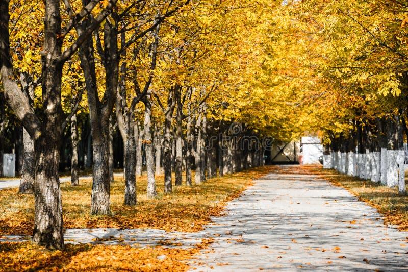 Allée de parc d'automne photographie stock
