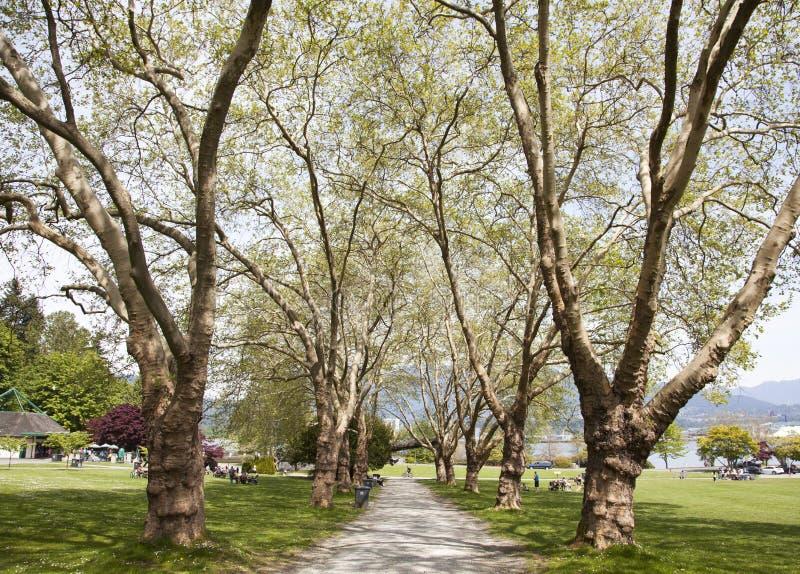 Allée de parc du ` s de Vancouver photo libre de droits