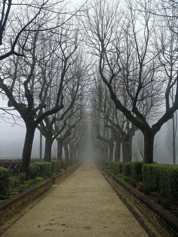 Allée de peine en automne dans le brouillard Gothique mystérieux image stock